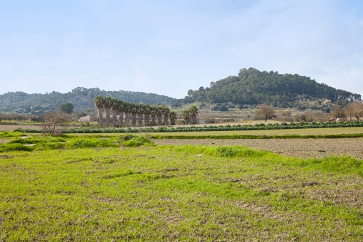 Quietly-situated building plot with beautiful views, ruins and 2 water sources near Sineu