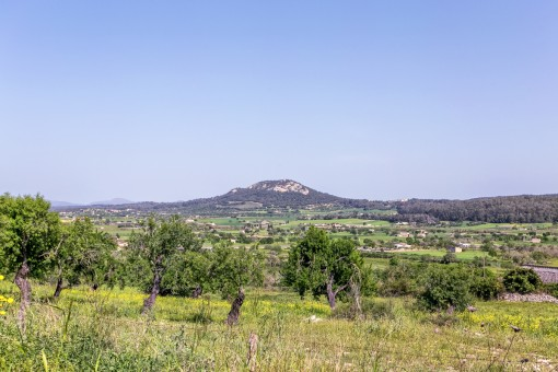 Fantastic building plot in a quiet location with open sweeping views and a stone-built house needing restoration in Sineu