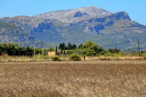 Perceel in Alcudia