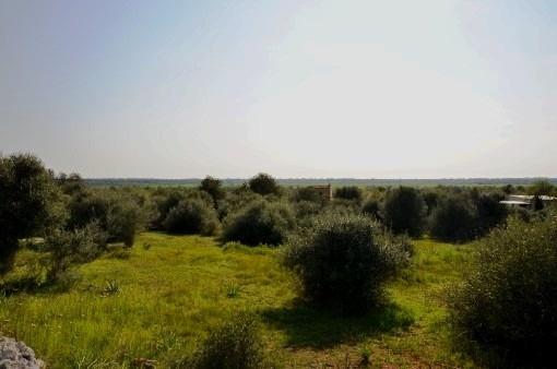 Perceel in Santanyi