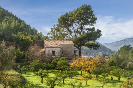 Finca on a plot of more than 25 hectares with manor house in need of renovation