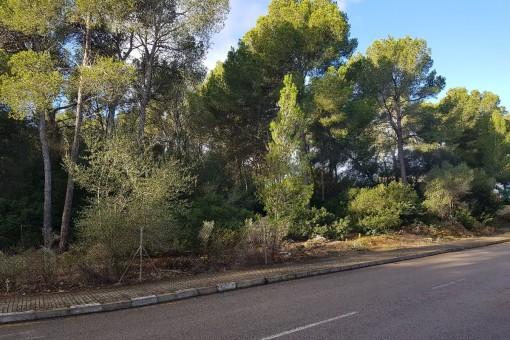 Perceel in Santa Ponsa