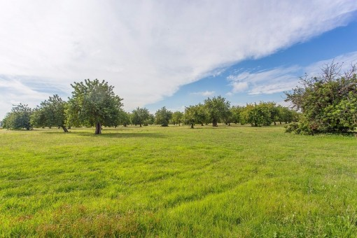 Formidable country estate with approx. 825,000 sqm of land in the municipality of Palma