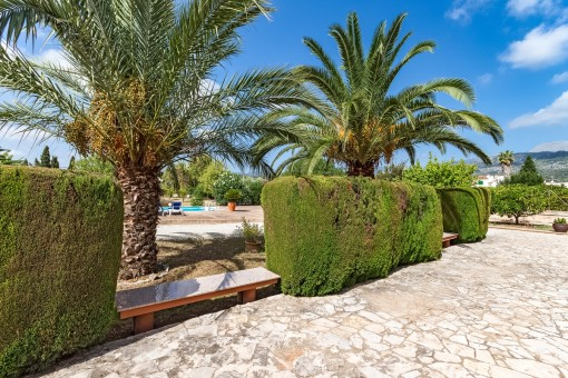 Natural stones and palm trees